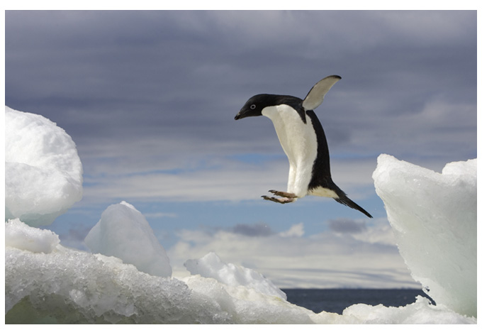 Penguins Can Fly 2